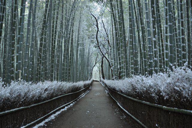 雪化粧した京都嵐山の竹林