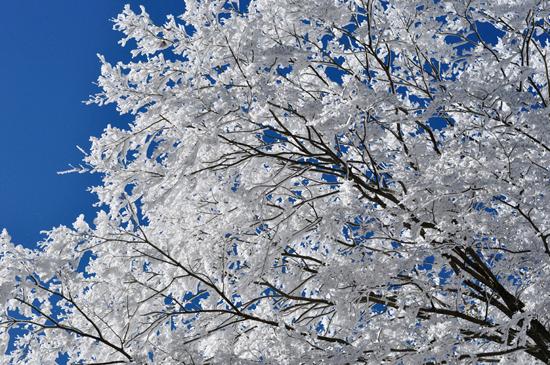 愛宕山に咲く雪の花