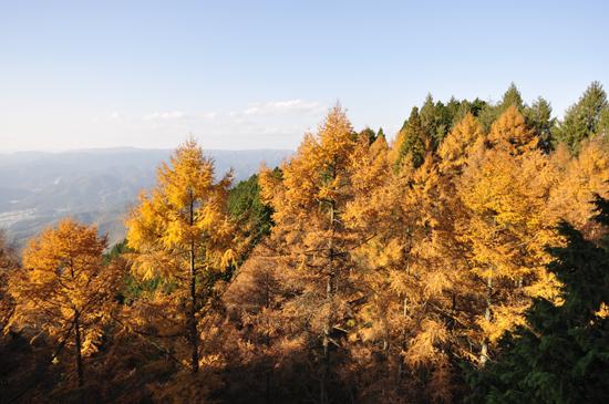 比叡山ロープウェイからの紅葉
