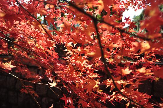 紅葉 真如堂