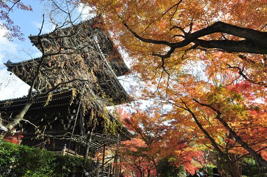 真如堂の紅葉:三重塔