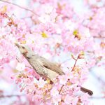 雨水 〜歩くと春の匂いを感じる季節〜