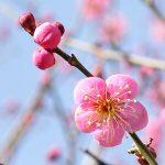 可愛らしい春が、京都にやってきました。