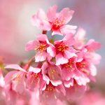 春分 〜一年の節目。終わり、そして始まる季節。〜