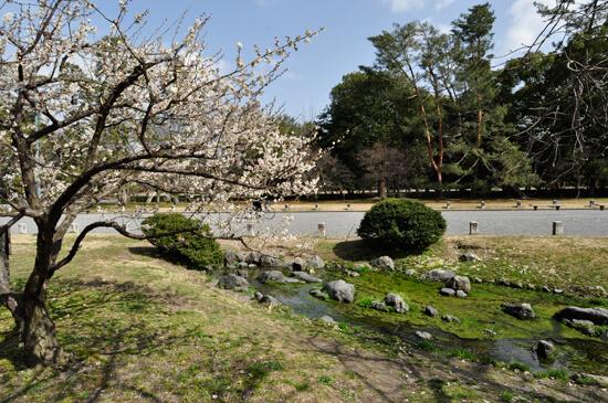 京都御苑の川と梅