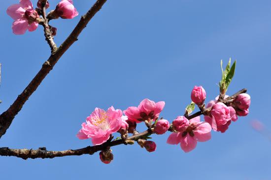 ピンクがとっても可愛い桃