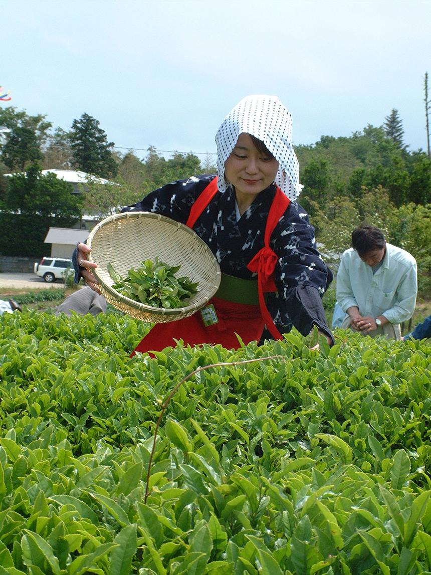 お茶フェスの魅力